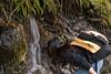 The water in the stream is very pure. Drinkable and very good!<br /> -----<br /> L'eau du ruisseau est très pure. Buvable et même plutôt bonne !