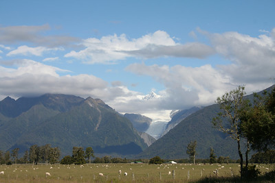 A nice veiw up the valley into the Fox Glacier with some sheep in the foreground.