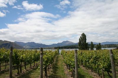 The Ribbon Vineyard along Lake Wanaka. We had a great bottle of Sauvingon Blanc here.