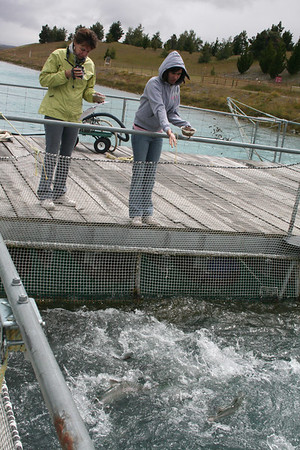 Feeding the slamon in the canal fish farm.