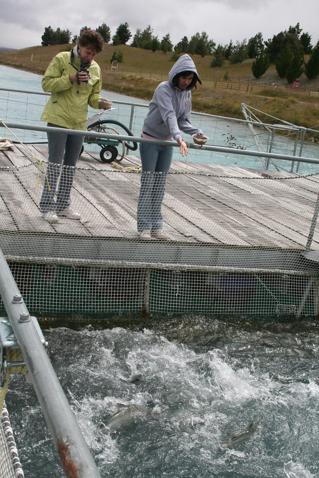 Feeding the slamon in the canal fish farm.