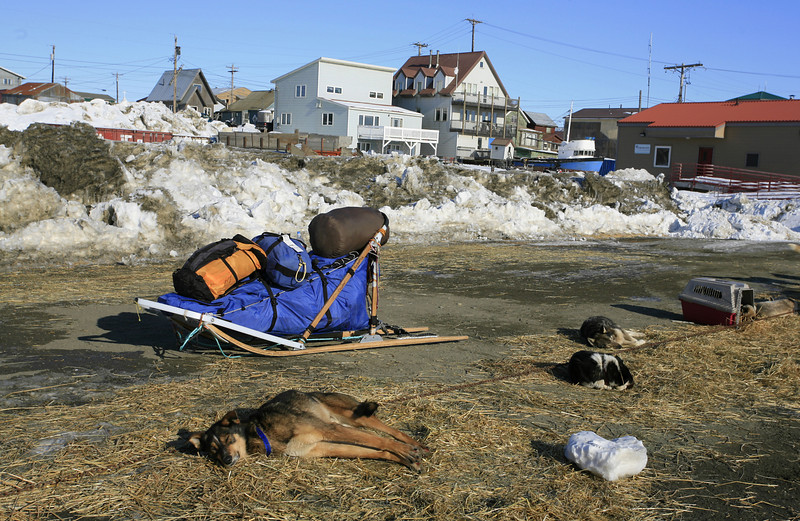 Sled dogs relaxing in the sun