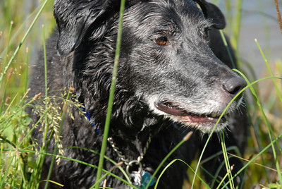 hapiness is a wet dog on a hot day