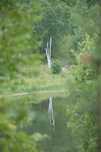 A peek through the trees at the lake.