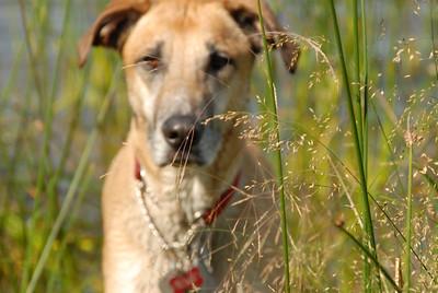 Galla peeks through the reeds