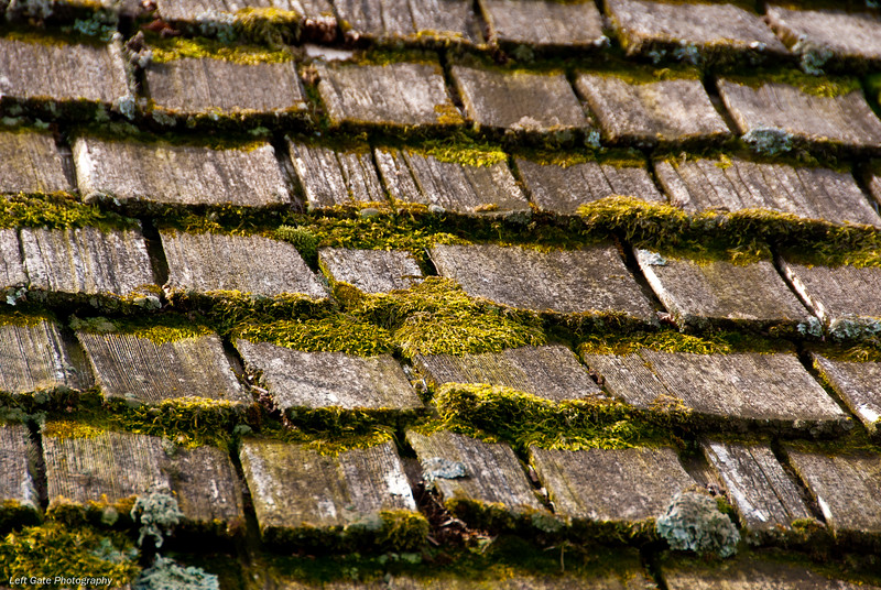 Moss Thatch<br /> The whole roof was covered in this moss.
