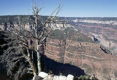 1970 Aug: North Rim of the Grand Canyon, AZ