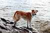 Anja played in the water and on the rocks a lot!  She loves adventures!