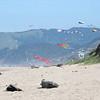Kite extravaganza at Lincoln City Beach, OR