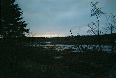 Oakes Bog at sunset