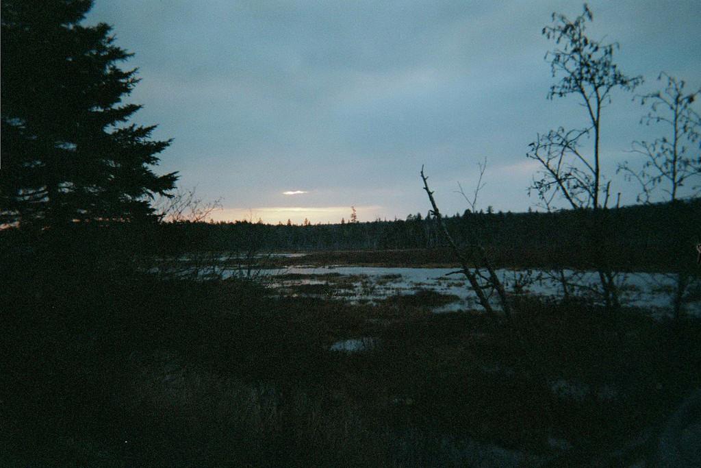 Oakes Bog at sunset