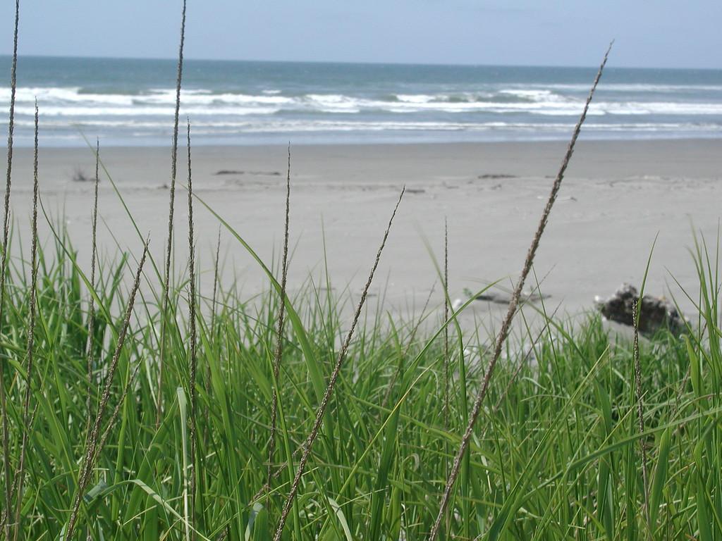 Ocean & grass 3