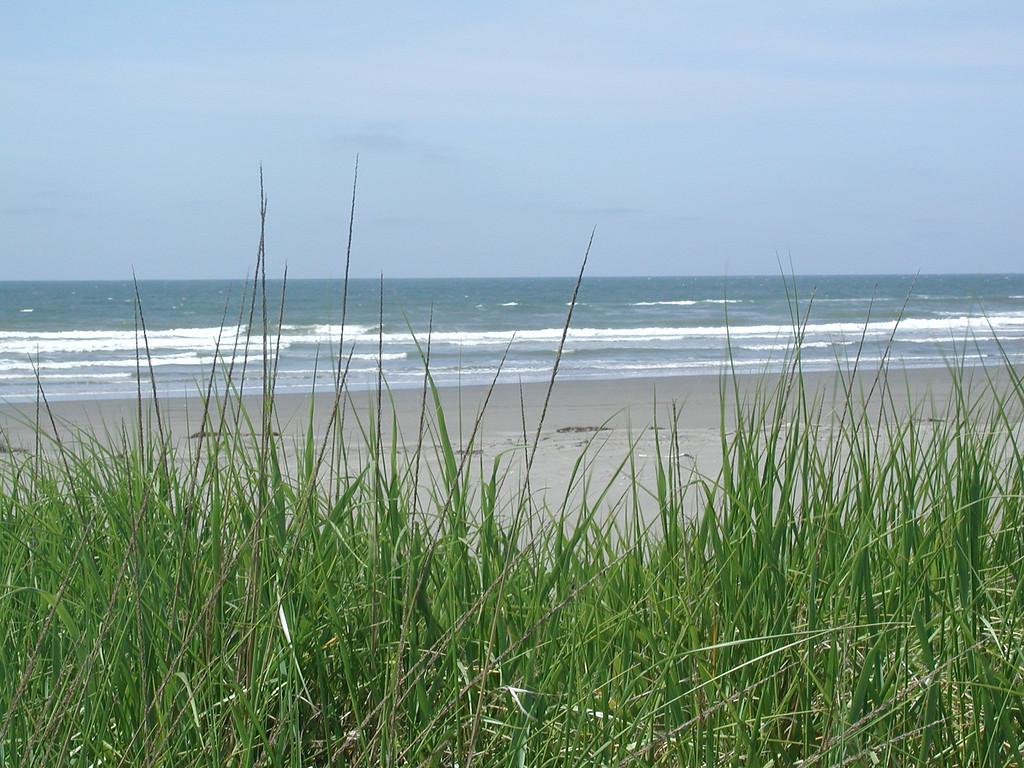 Ocean & grass 1