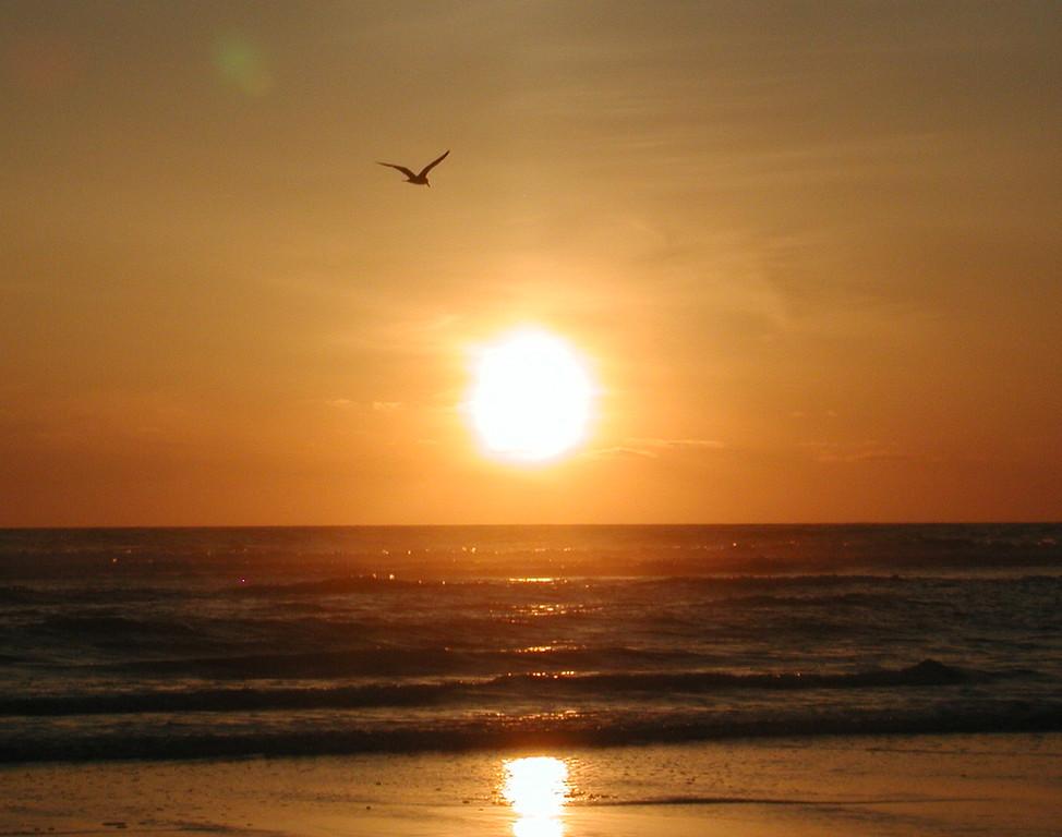Ocean Shores Sunset 16