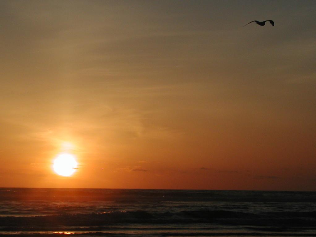 Ocean Shores Sunset 21