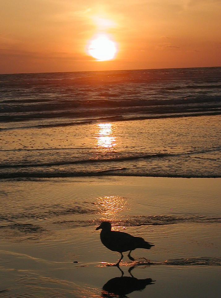 Ocean Shores Sunset 23