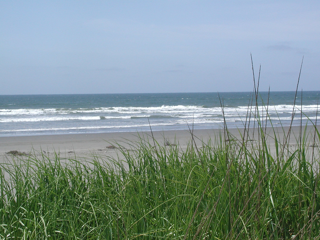 Ocean & grass 2