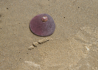 20110723_Oceano_Dunes_013