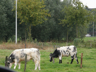 October 2007 Vacation - Brugge