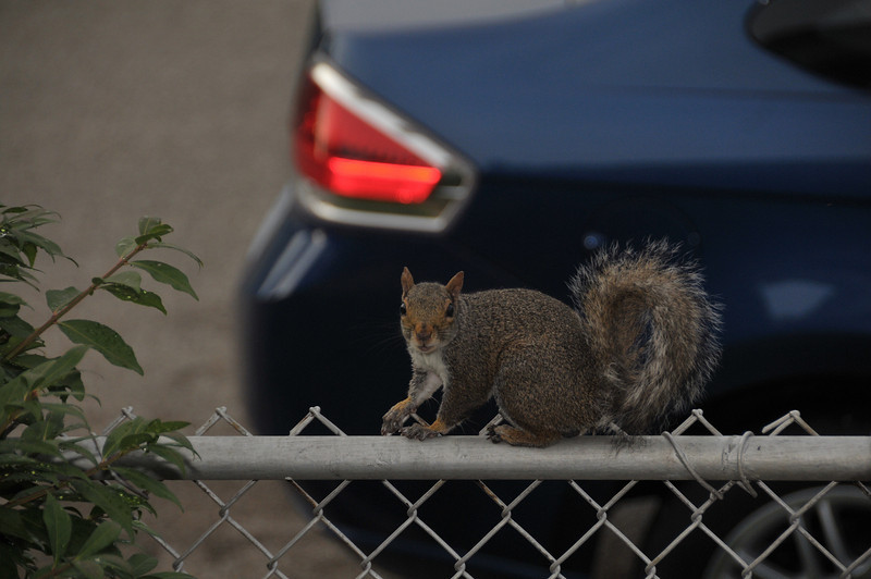 One of the many squirrels that come up looking for some peanuts.  Mom keeps several bags of nuts around to feed them.