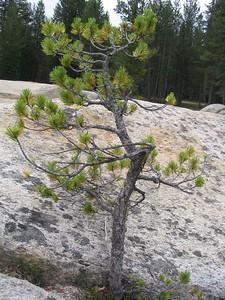Cute little trees