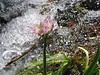 Could not get the camera to focus on the flower!  But the water is nice