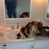 """A thirsty visitor to Suite 19 at the Albion River Inn.  See <a href=""""http://albionriverinn.com/"""">http://albionriverinn.com/</a>"""