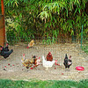 What can I say but that it's great to have room for chickens too!