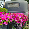 "We came upon this old truck turned into a ""planter"" on the way back from church if memory serves right. Kind of unique!"