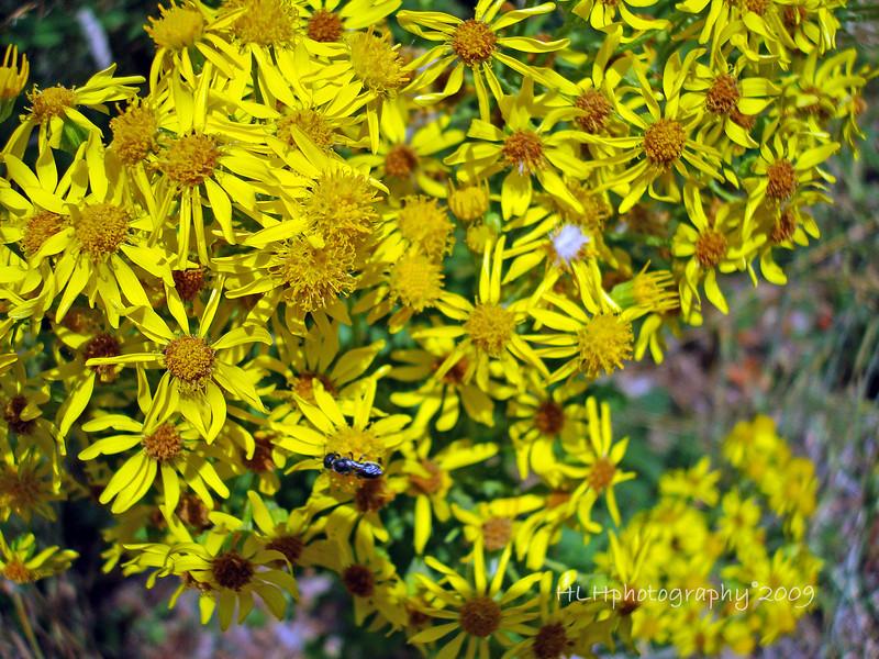 Wild flowers,  Pittock Mansion, Portland, OR