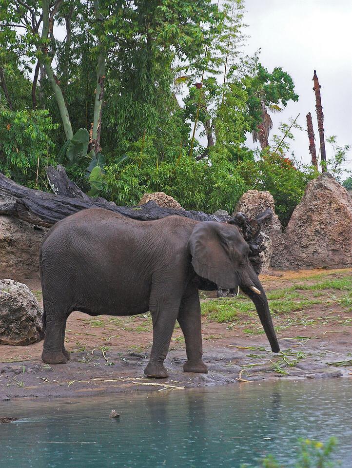 Elephant on Safari tour