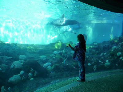 FL, February 2011: Sea World
