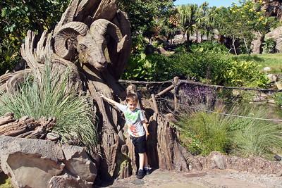 Day 2 - Disney's Animal Kingdom, pool, and Epcot new