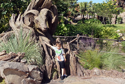 Day 2 - Disney's Animal Kingdom, pool, and Epcot new