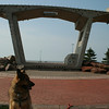 Ginger at the Confederation Bridge information center on PEI.