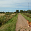 Ginger on a section of the Confederation Trail in O'Leary, PEI.