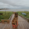Ginger at the landing at Victoria-by-the-Sea, PEI.