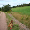 Ginger on a section of the Confederation Trail at Hunter River, PEI.