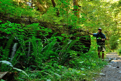 Hiking out the Staircase-Cascade trail, on the east side of Olympic National Park, Washington.