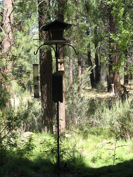 In the raptor area, this cute bird feeder. We bought one of these poles after we got home.