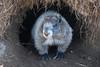 Marmot's Front door