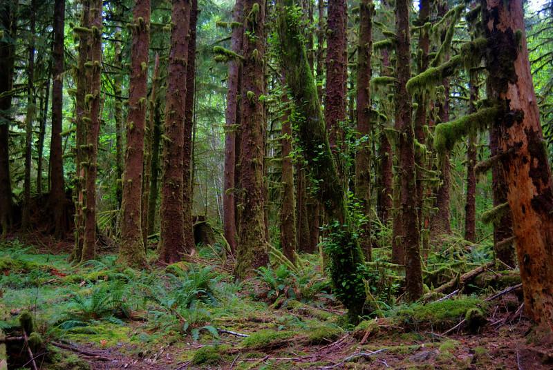Misty Morning in Hoe Rainforest