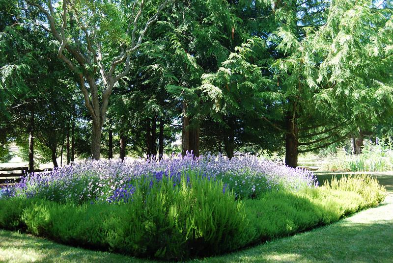 Lavender Farm Sequin, WA