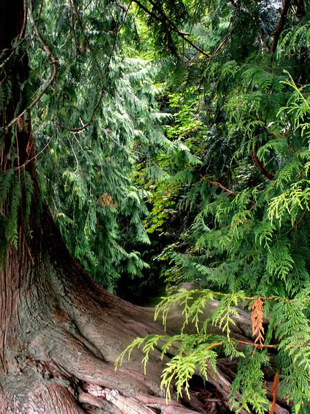 Chuckonut Magical Forest!