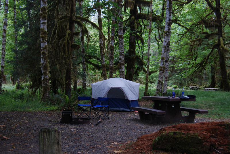 Campsite Hoh Rainforest