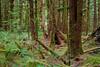 The deep woods at Hoh Rainforest
