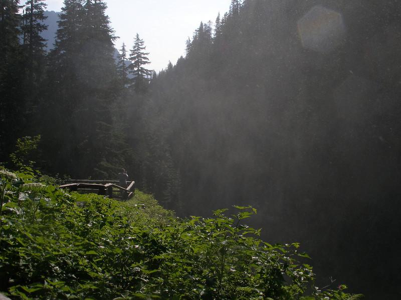 Lush vegetation and mist rising