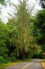 Moss in Hoh Rainforest