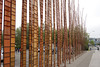 "Seattle ""bamboo"" by convention center"