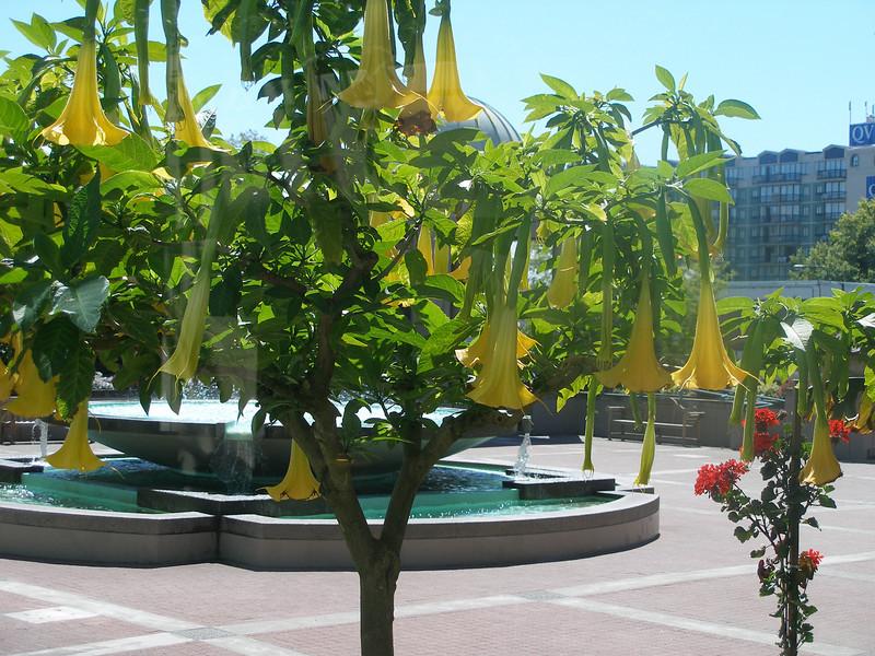 Trumpet Tree in Empress Gardens